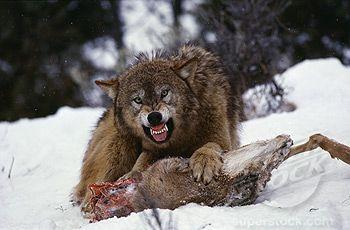 Lista animales salvajes yahoo dating 5