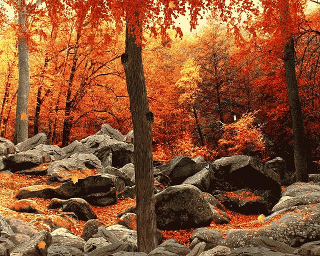 3D-Autumn-Woods_2